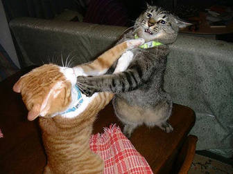 cats_fighting_102006_5.
